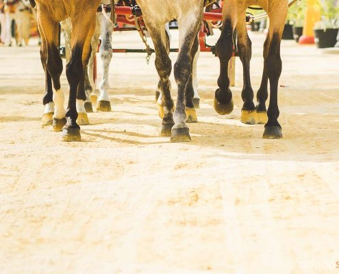feria-del-caballo-jerez-14