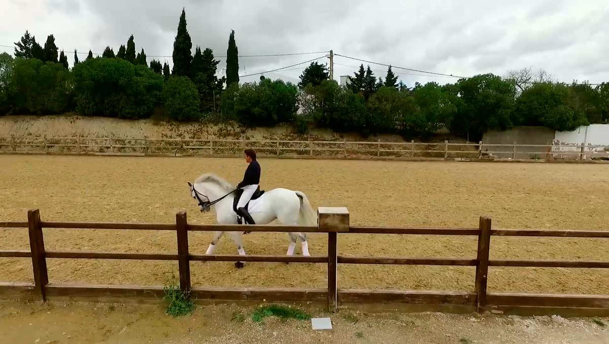 video-caballos-jerez-yeguada01