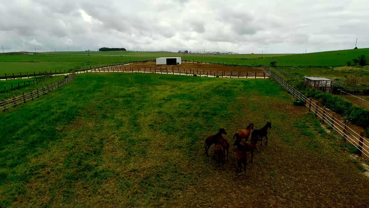video-caballos-jerez-yeguada02