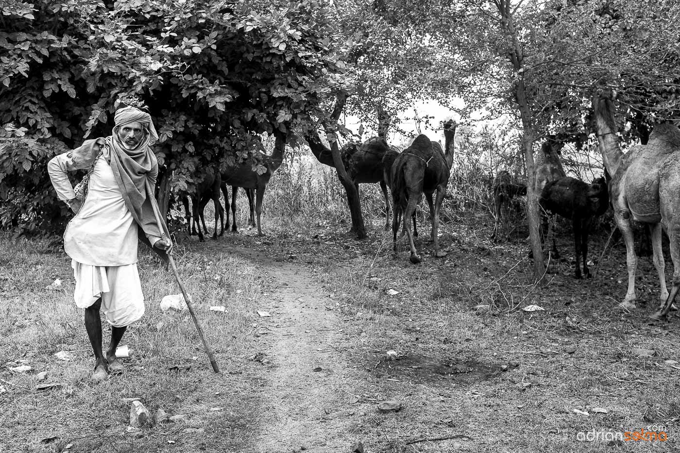 Pastor de camellos. Jaipur