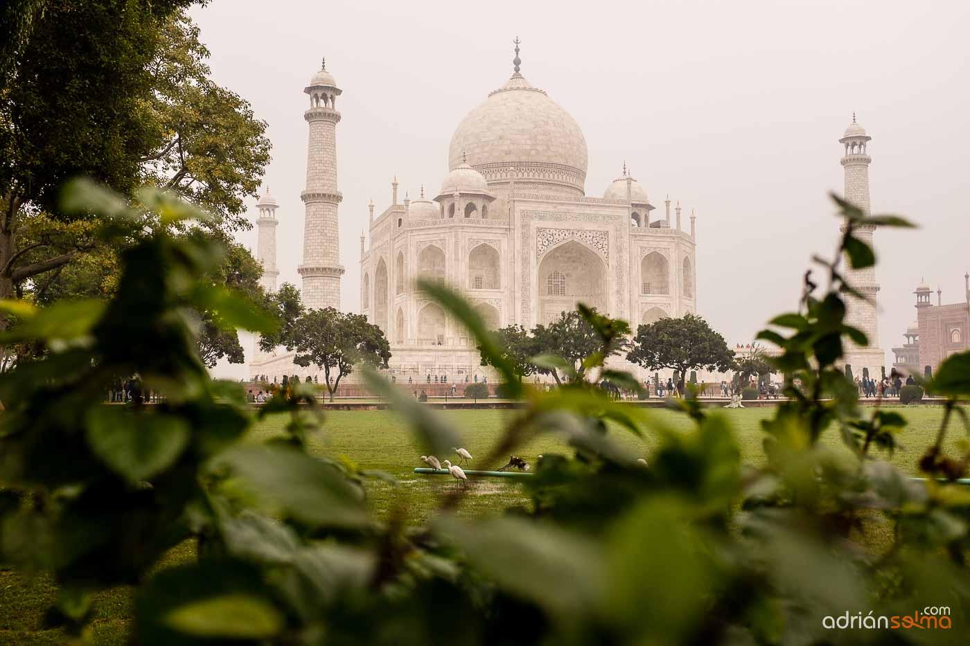 Vista del impresionante Taj Mahal desde sus jardines